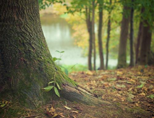 Anhörung Waldentwicklung in Sachsen: Mischwälder und mehr Wildnis sind Gebot der Stunde